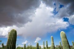 Cacto do Saguaro e céu da monção Fotografia de Stock Royalty Free