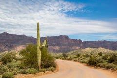 Cacto do Saguaro na estrada de peralta Foto de Stock Royalty Free