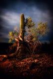 Cacto do Saguaro no crepúsculo Fotografia de Stock