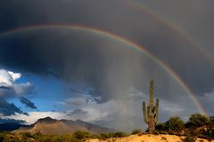 Cacto doble del Saguaro del arco iris Imagen de archivo