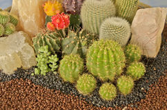 Cacto e cascalho bonitos no jardim do cascalho Fotografia de Stock Royalty Free