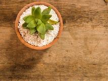 Cacto e planta carnuda Foto de Stock Royalty Free