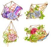 Cacto e planta carnuda ajustados com terrarium geométrico Imagem de Stock