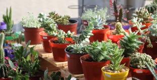 Cacto e plantas carnudas foto de stock