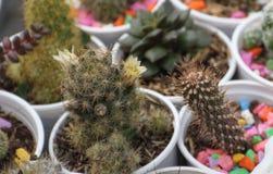 Cacto e plantas carnudas Fotografia de Stock Royalty Free