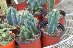 Cacto e plantas carnudas Imagem de Stock Royalty Free