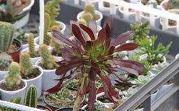 Cacto e plantas carnudas Imagens de Stock