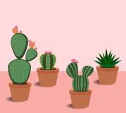 Cacto e plantas carnudas com flores Imagem de Stock