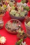 Cacto e plantas carnudas de jardinagem Foto de Stock Royalty Free