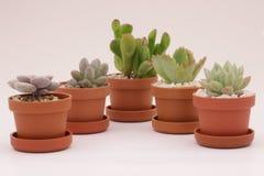 Cacto e plantas carnudas de jardinagem Fotos de Stock Royalty Free
