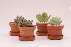 Cacto e plantas carnudas de jardinagem Imagem de Stock