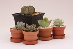 Cacto e plantas carnudas de jardinagem Fotografia de Stock