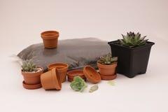 Cacto e plantas carnudas de jardinagem Foto de Stock