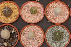 Cacto e plantas carnudas de jardinagem Fotografia de Stock Royalty Free