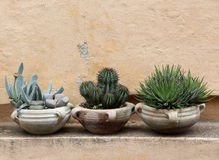 Cacto e plantas carnudas em uns frascos da terracota imagens de stock royalty free