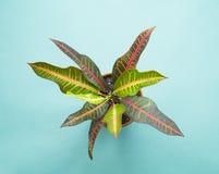Cacto e plantas carnudas no azul Projeto mínimo da arte dos verdes tropicais imagens de stock