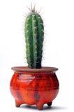 Cacto en de cerámica rojo Imagen de archivo