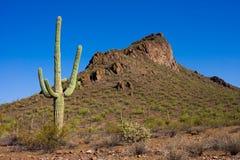 Cacto en el desierto Foto de archivo libre de regalías