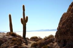 Cacto en el desierto Imagen de archivo libre de regalías