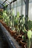 Cacto en jardín botánico Fotografía de archivo