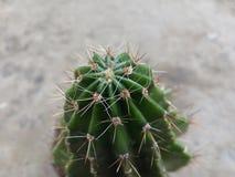 Cacto, espinhos, fundo, macro, planta, deserto, verde, espinho, sharp, planta carnuda, hemorroidas, branco, natureza, cor, verão, Foto de Stock