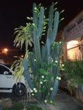 Cacto/flor que floresce/plantas/vida Imagem de Stock Royalty Free
