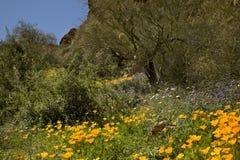 Cacto, flores y montañas del desierto Imagenes de archivo