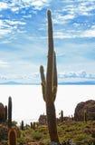 Cacto gigante centenário em Isla Incahuasi, Rocky Outcrop no meio dos planos de sal de Uyuni em Bolívia, Ámérica do Sul imagem de stock