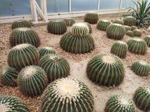 cacto grande no deserto foto de stock