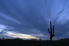 Cacto inminente de la tormenta y del Saguaro Imagen de archivo libre de regalías