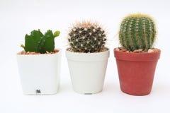 Cacto mini no vaso de flores imagem de stock royalty free
