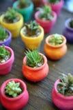 Cacto miniatura en plantadores coloridos Imagen de archivo libre de regalías