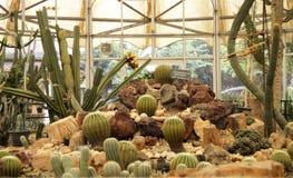 Cacto na casa botânica Foto de Stock Royalty Free