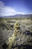 Cacto na paisagem do vale de Searles Imagens de Stock