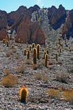 Cacto no deserto fotografia de stock