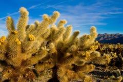 Cacto no deserto Foto de Stock