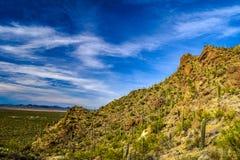Cacto no deserto no Arizona imagem de stock