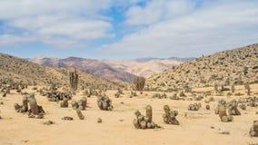 Cacto no deserto de Atacama, Pan de Azucar National Park no Chile, deserto flowerful de Atacama imagens de stock
