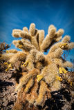 Cacto no deserto, EUA Fotografia de Stock Royalty Free