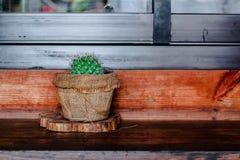 Cacto no fundo de madeira da textura Imagens de Stock Royalty Free