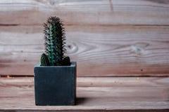 Cacto no fundo de madeira da textura Imagem de Stock