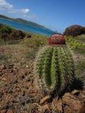 Cacto no paraíso Culebrita, Puerto Rico Imagem de Stock Royalty Free
