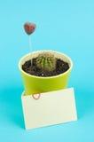 Cacto no potenciômetro com cartão e corações decorativos Fotos de Stock