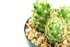 Cacto no potenciômetro de flor Imagens de Stock Royalty Free