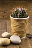 Cacto pequeno em um copo de café no backround de madeira rústico com pebbl Fotografia de Stock Royalty Free