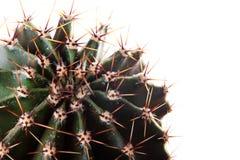 Cacto, planta carnuda Fotografia de Stock