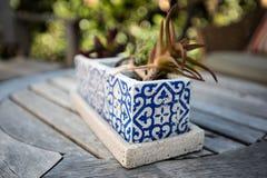 Cacto plantado no potenciômetro da pedra decorativa no jardim imagens de stock