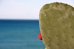Cacto por el mar 2 Imagen de archivo libre de regalías