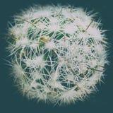cacto verde com agulhas Conceito: situação ambiental pobre na terra do planeta fotos de stock royalty free