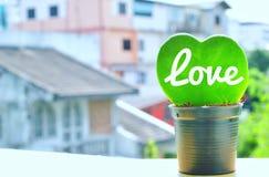 Cacto verde da forma do coração Fotografia de Stock Royalty Free